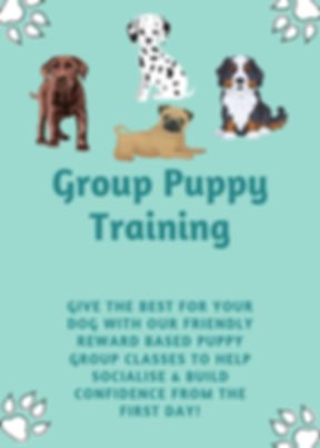 puppy socialiasation classes