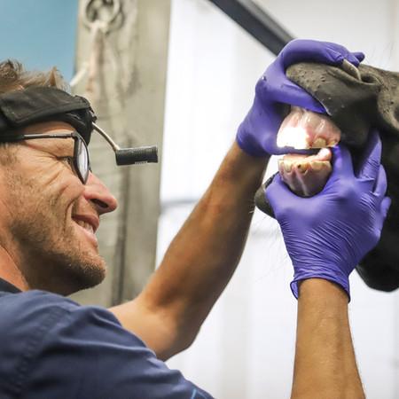 Equine Dental Examination