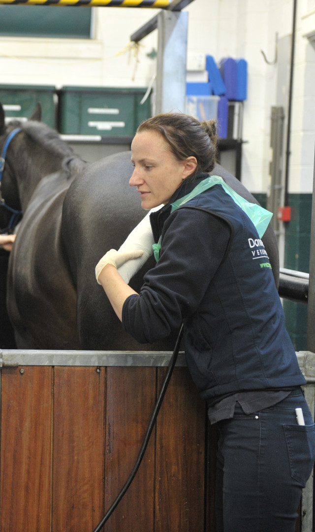 Gynaecological Exam of Mare