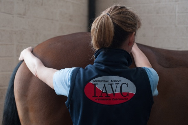 Veterinary Chiropractic at Donnington Grove Equine Vets