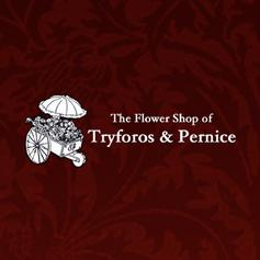 Tryforos & Pernice
