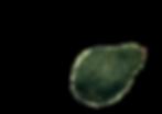 PUL_12_avocado_3.png