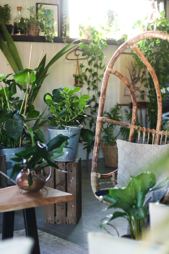 HOUSEPLANT CARE TIPS FOR BEGINNERS » + printable guide