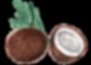 PUL_40_coconuts_compr.png