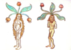 Botanical-Medieval-Male-And-Female-Mandr