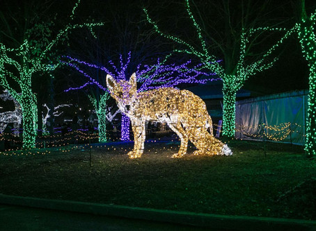 Detroit Zoo lights in Photos