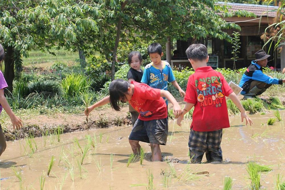 menanam padi anak citra alam riverside