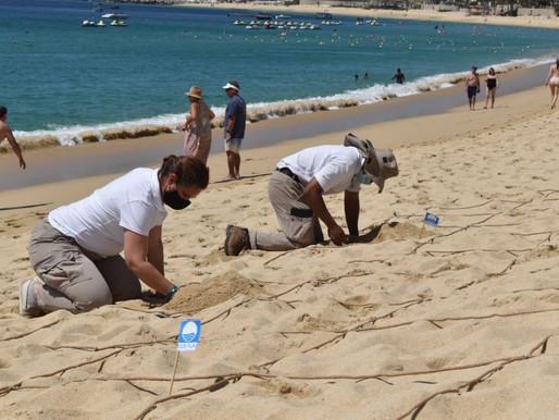 Los Cabos refrendará las certificaciones y banderas de sus playas