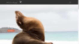 Screen Shot 2020-04-09 at 7.37.04 AM.png