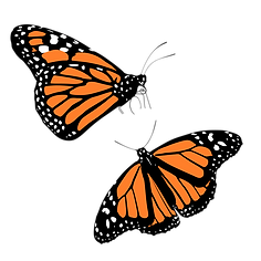 Monarch Butterflies.png