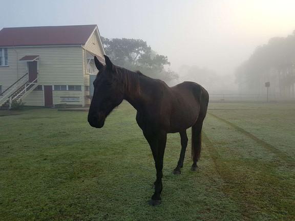 Naomi in the Mist IMG_9241.JPG