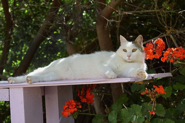 Cat garden 1.jpg