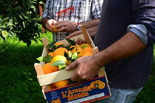 Oranges Navels (caisse de 10 kg)