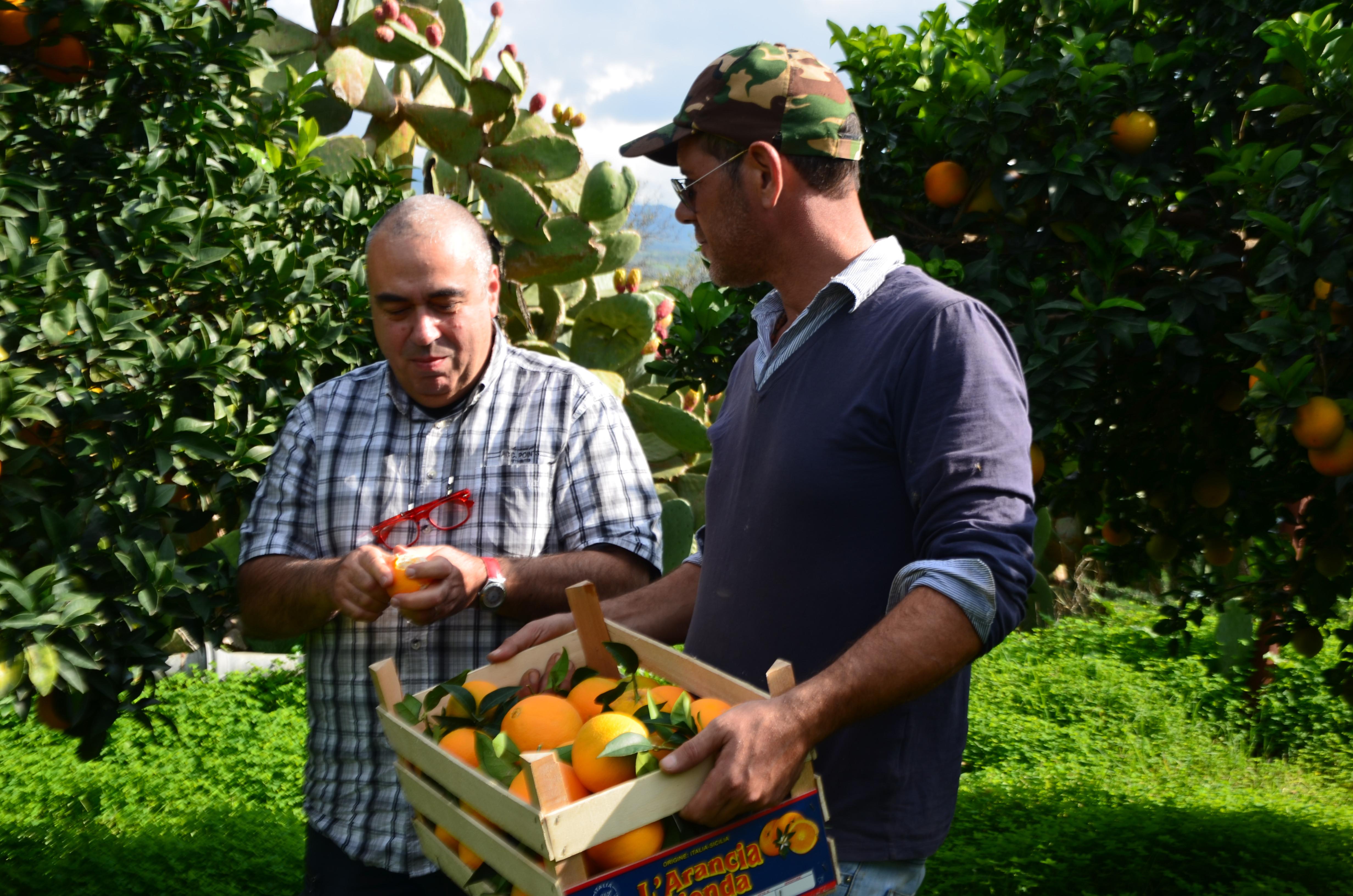 Enlèvement des oranges
