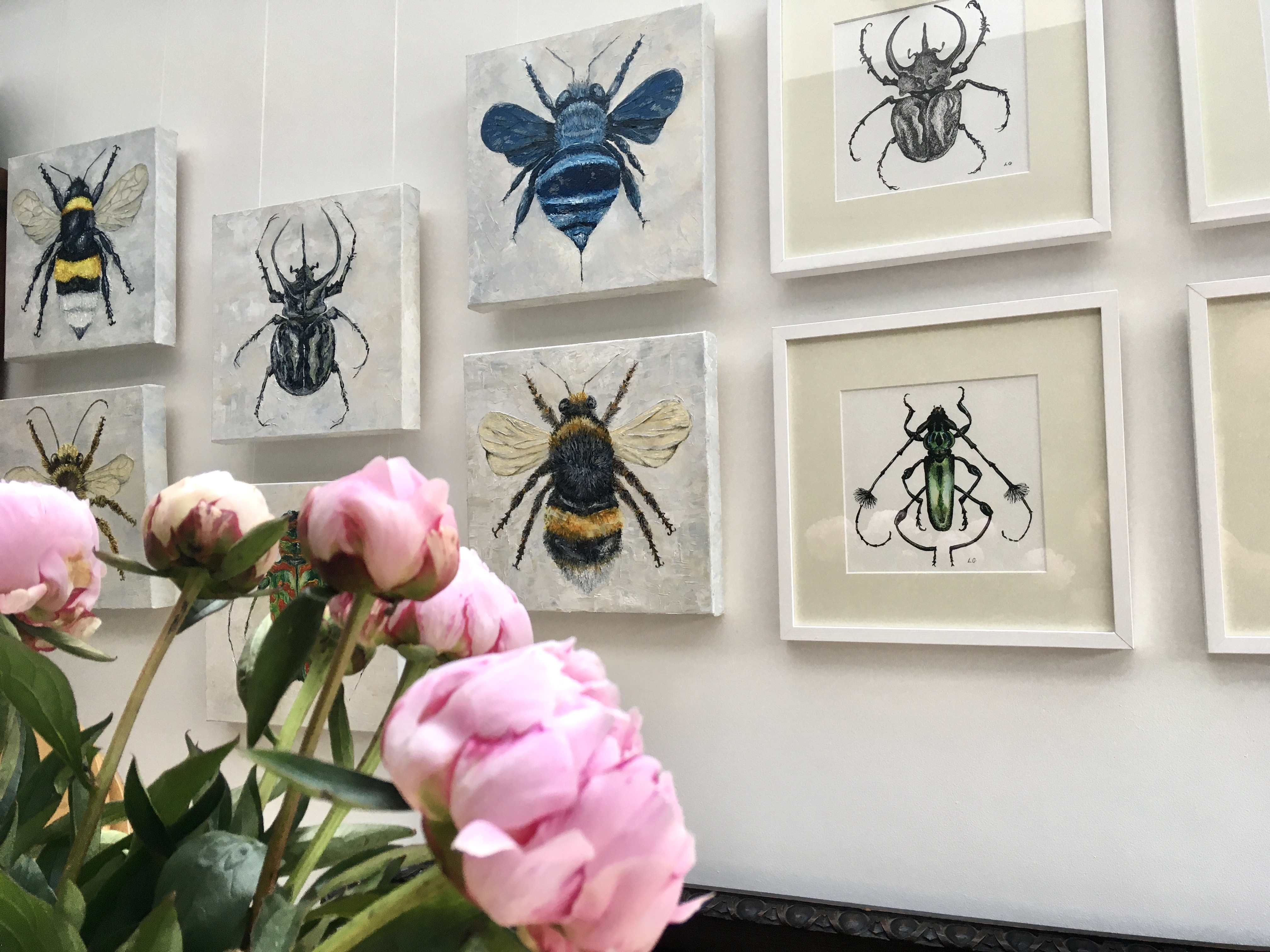 Exhibition of bee and beetle paintings