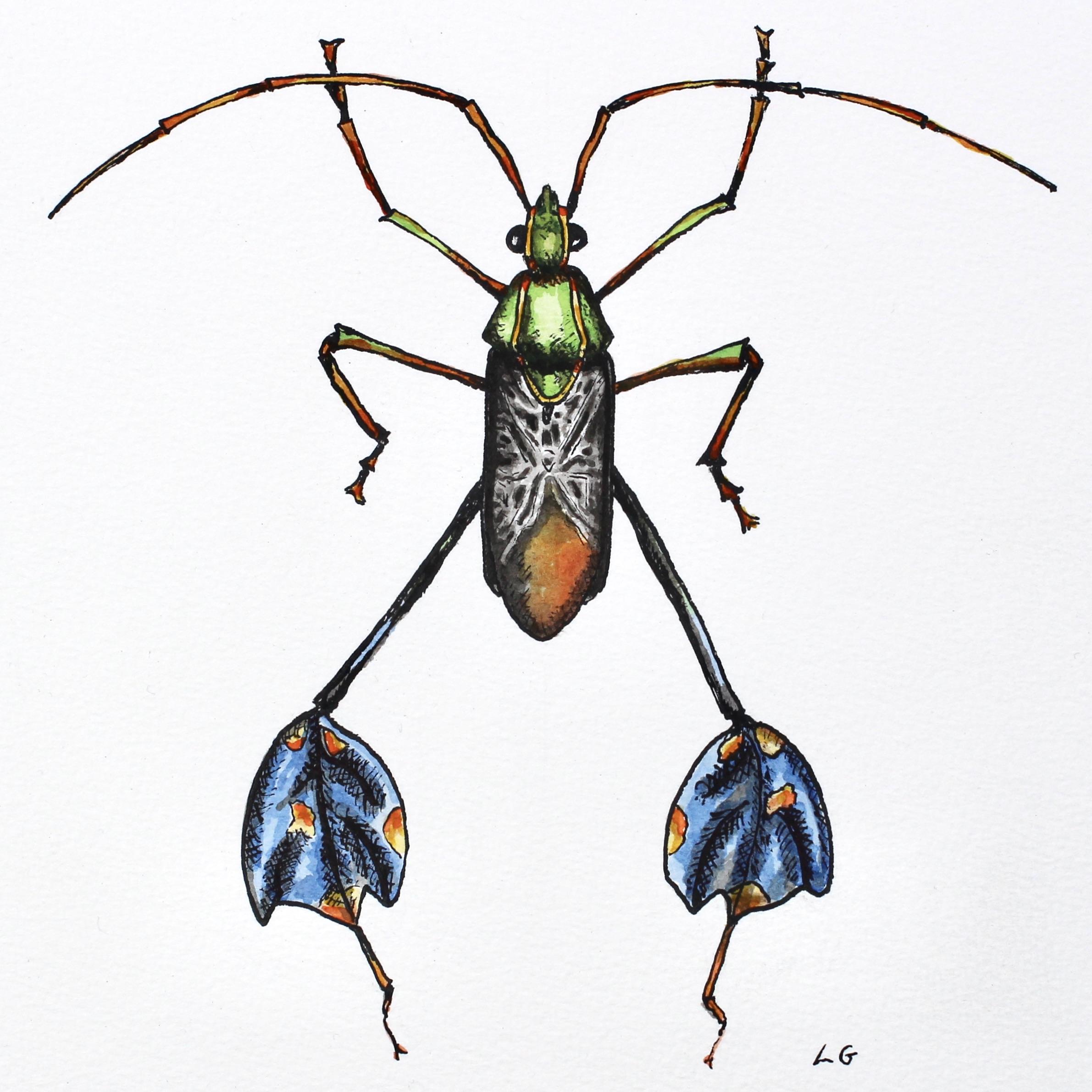 Blue leaf-footed bug