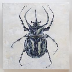 Chalcosoma Atlas Beetle
