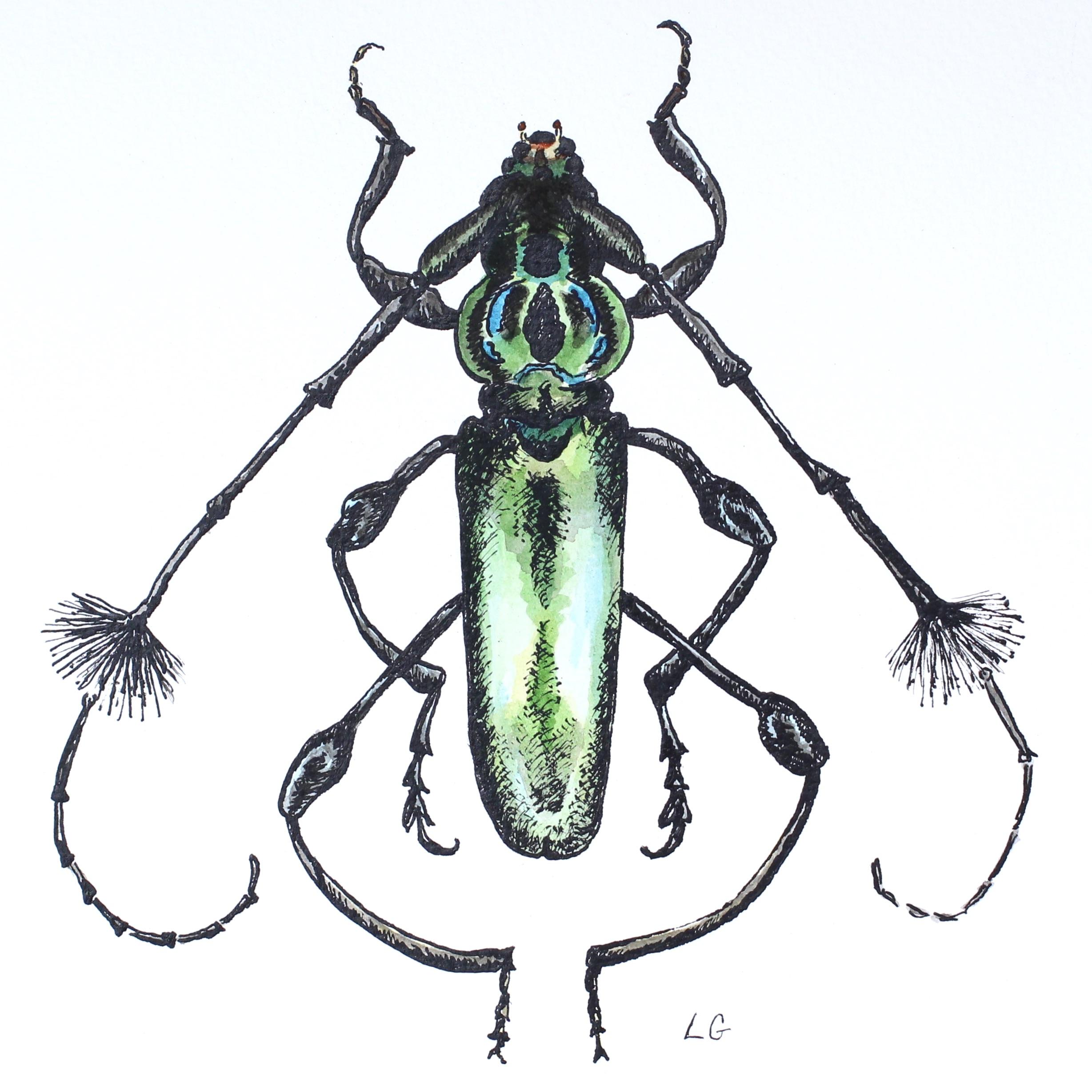 Green Beetle Cosmisoma