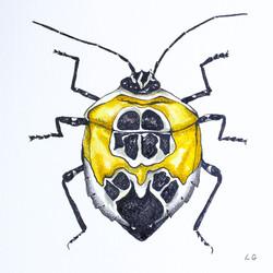 Yellow Beetle