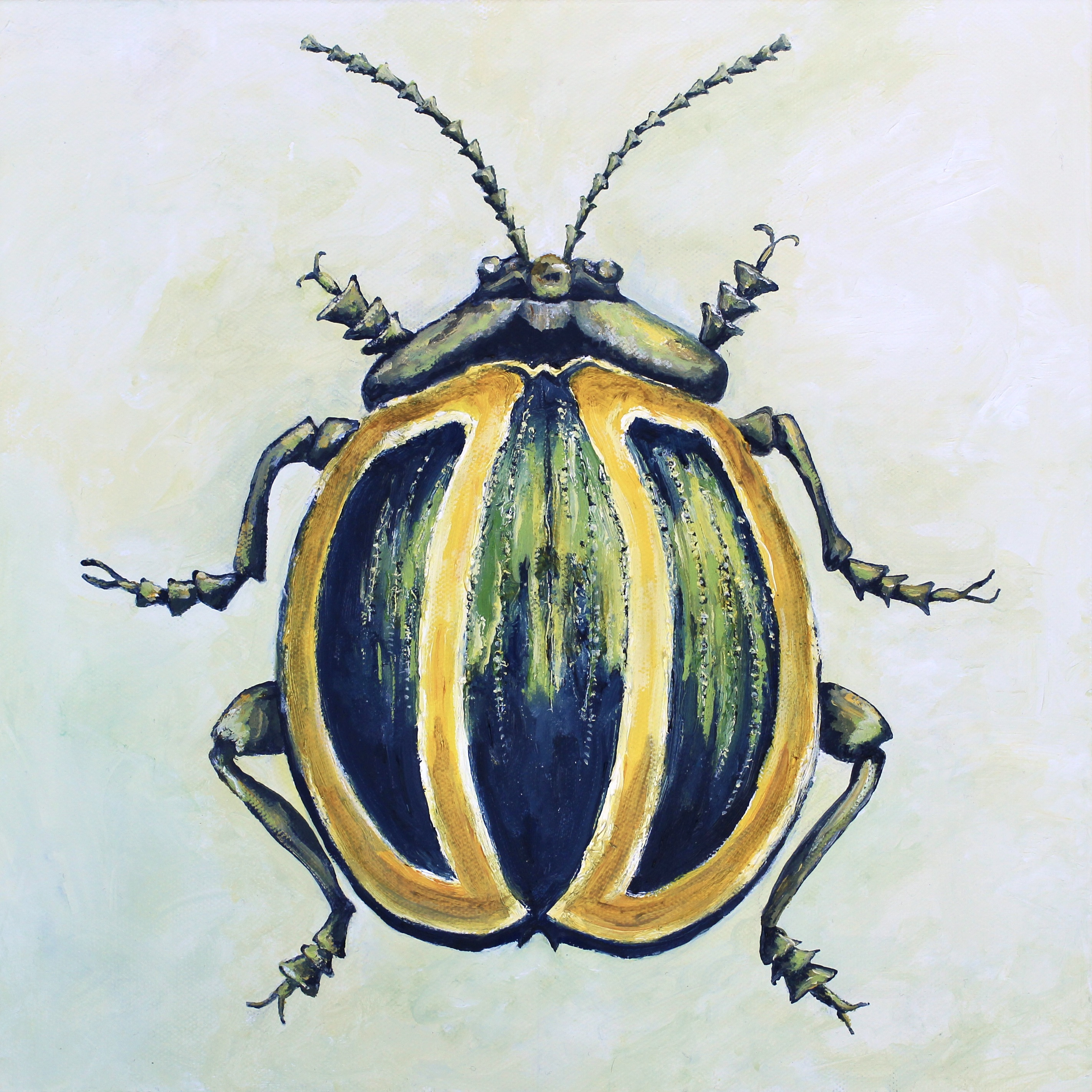 Yellow and Green Striped Beetle