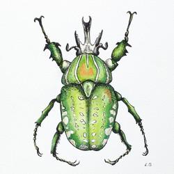 Green African Flower Beetle