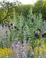 Verwendbare Samen, Gartenpflege