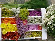 Teeherstellung, Verwendbare Blüten