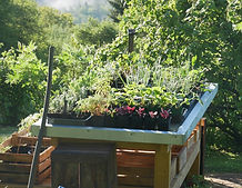 Andrea Bregar | Leben mit Kräutern |Pflanzenarkt, Pflanzenverkauf, Kräuterpflanzen