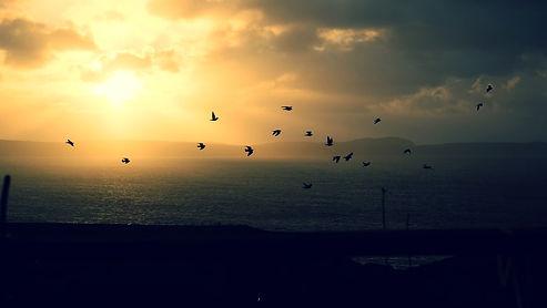 Birds flying across Islay