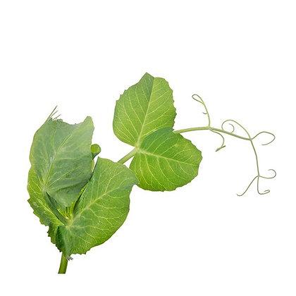 folha de ervilha, pea leaf