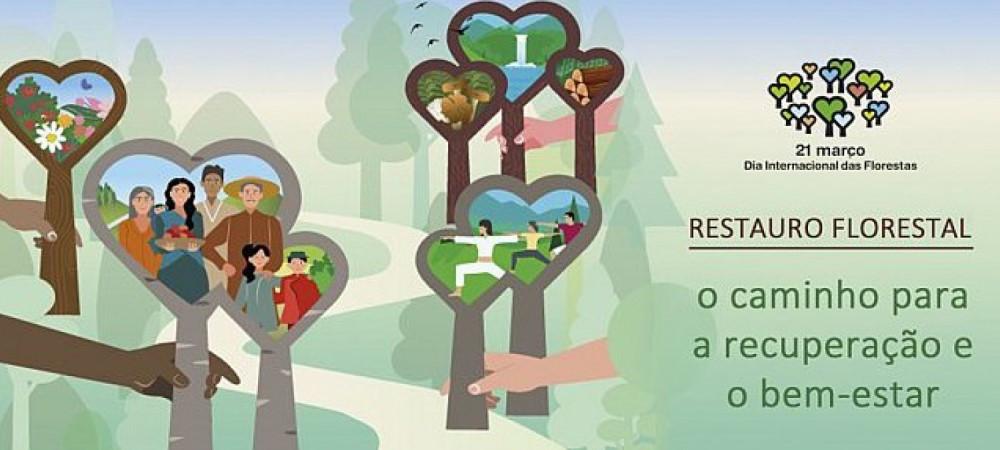 florestas, árvores, natureza