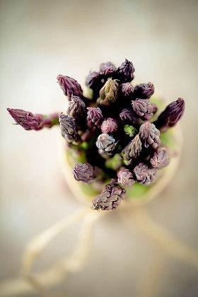 espargos roxos, purple asparagus, bio, agrobio