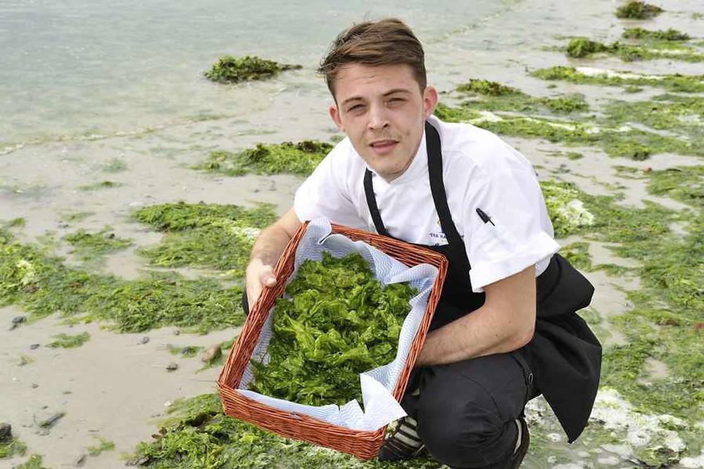 algae, algas, macroalgas, alface-do-mar