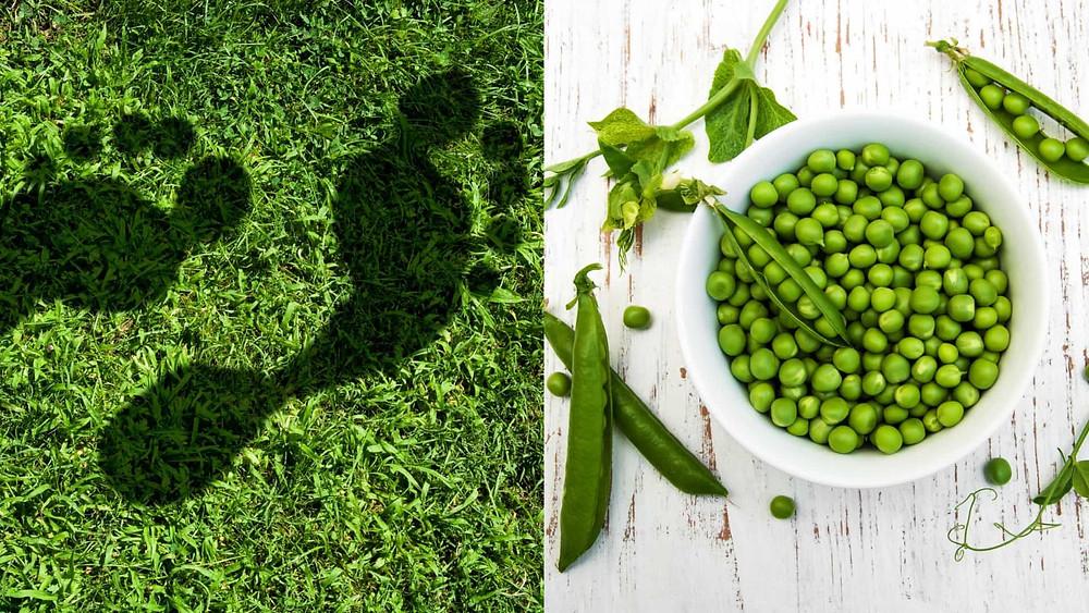 sustentabilidade, pegada alimentar, pegada ecológica
