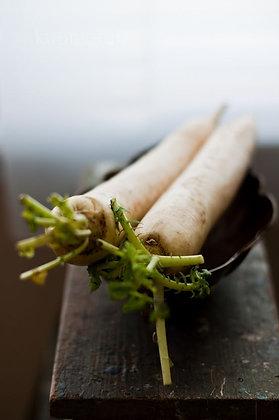 rábano branco, white radish, daikon