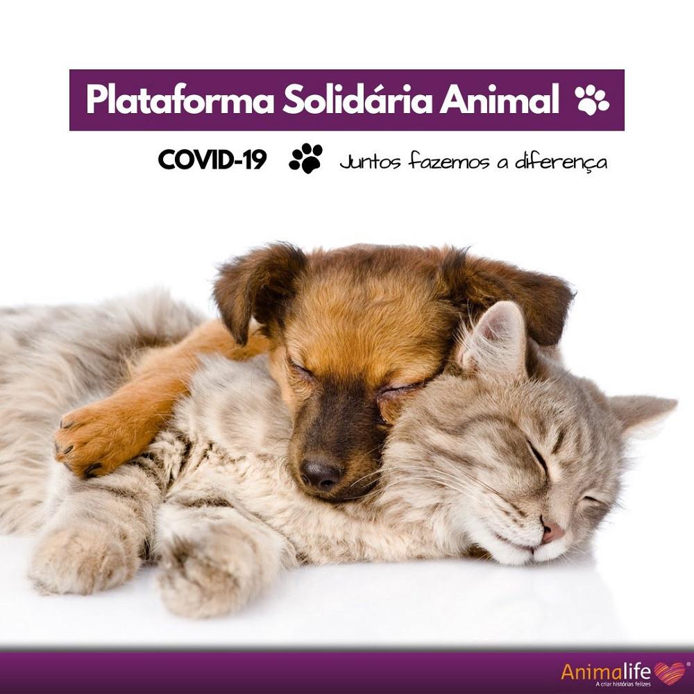 animais, solidariedade, causas, projecto, covid19, pandemia