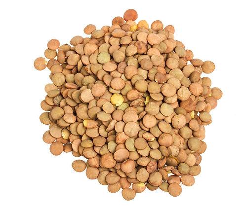 Lentilhas, Lentils, Lentilhas castanhas, Brown Lentils, Leguminosas