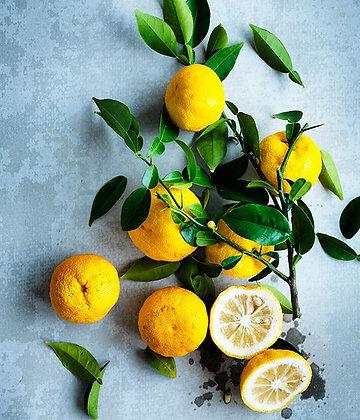 limão yuzu, citrinos, Japão