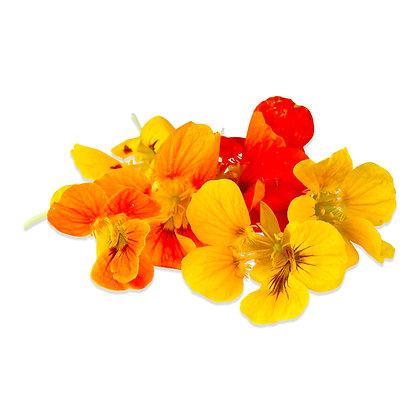 capuchinhas, nasturtium flowers, edible flowers, flores comestíveis