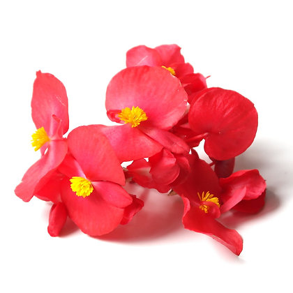 BEGÓNIAS, BEGONIA, EDIBLE FLOWERS, FLORES COMESTÍVEIS