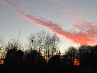 2017 - Pollarding, Starlings and Sunsets