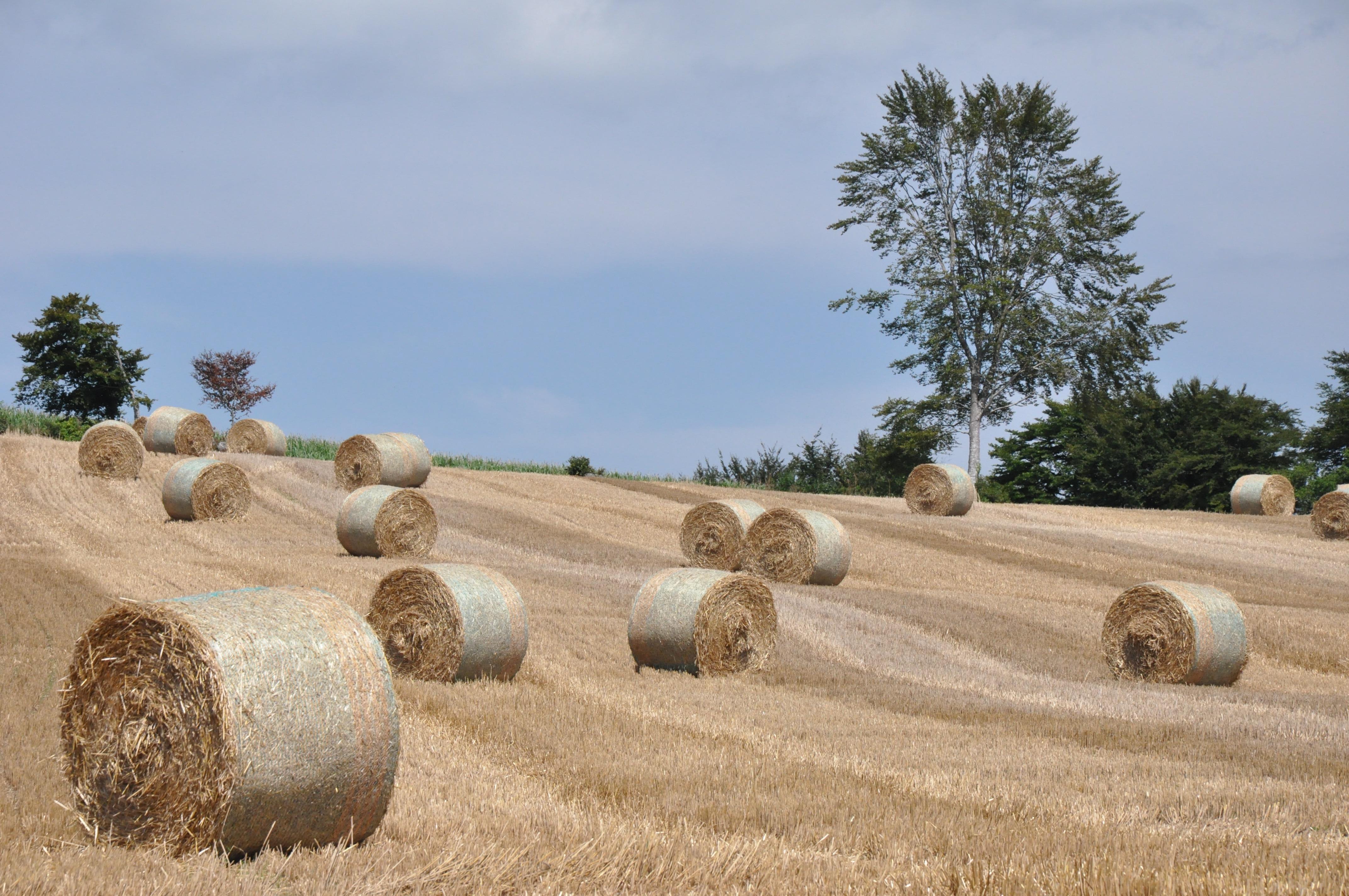 Normandy Landscape 001