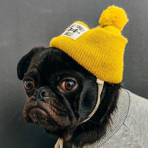 dog streetwear 2.jpg