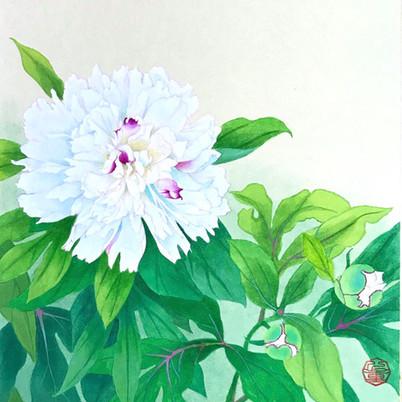 芍薬(色紙部分)