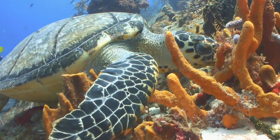 What Do Florida's Sea Turtles Eat with Dr. Erin Seney