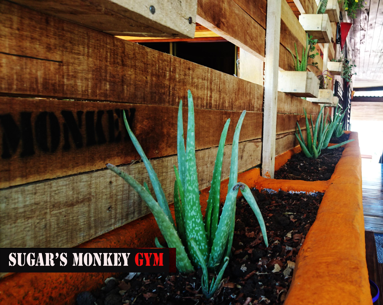 gym_green_wall_2_sugars_monkey_playa_grande_surf_poshtel_hotel_surf_school_trip_surfcamp_costa_rica_