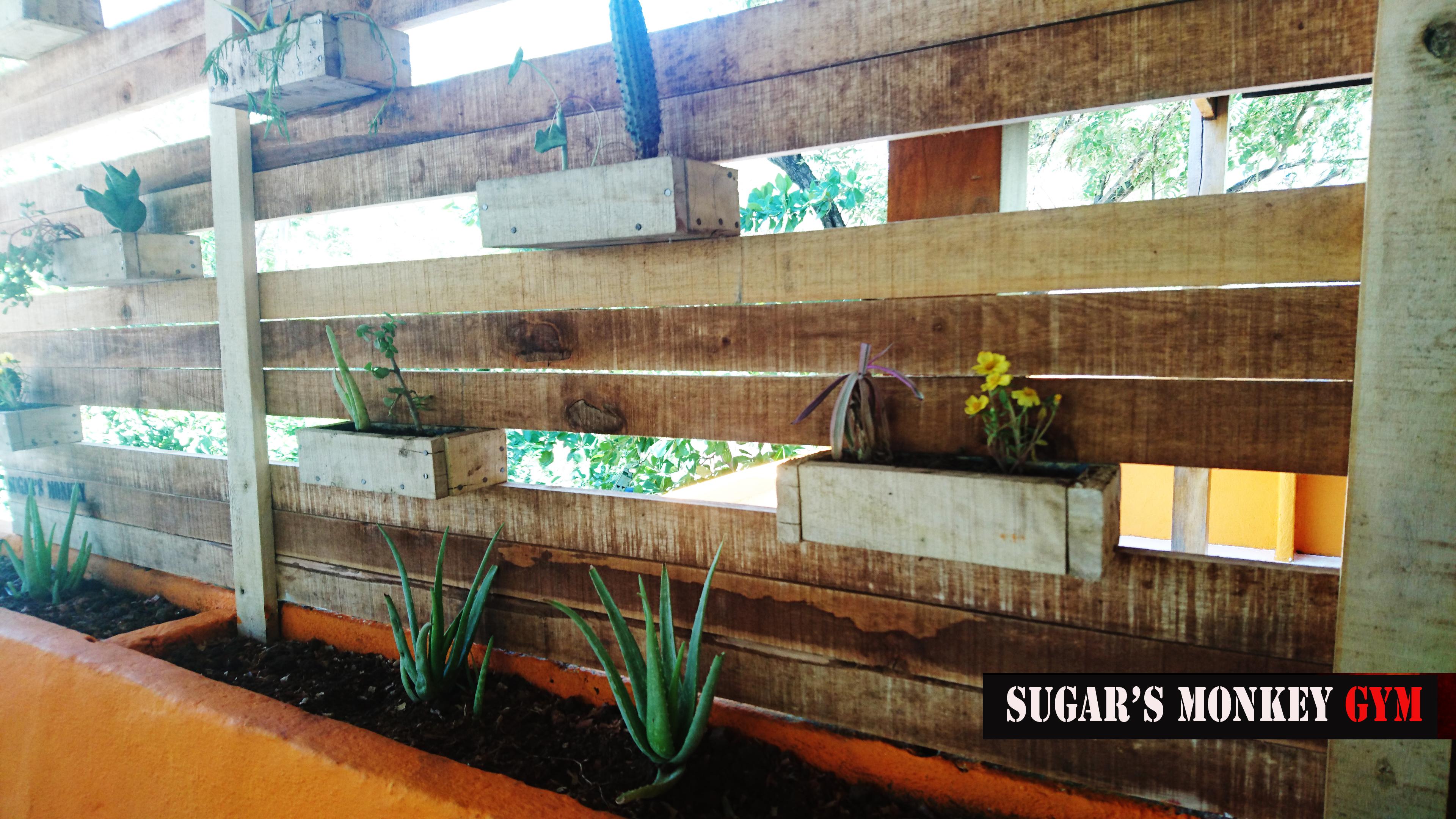 succulent_wall_gym_sugars_monkey_playa_grande_surf_poshtel_hotel_surf_school_trip_surfcamp_costa_ric