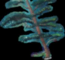 Base_image_tree.png