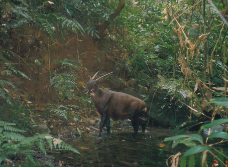 Why I believe in Saola conservation, Rob Timmins