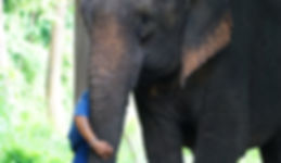 Sappraiwan Elephant Program 6 Days/5 Nights